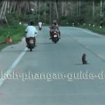Affe auf der Straße